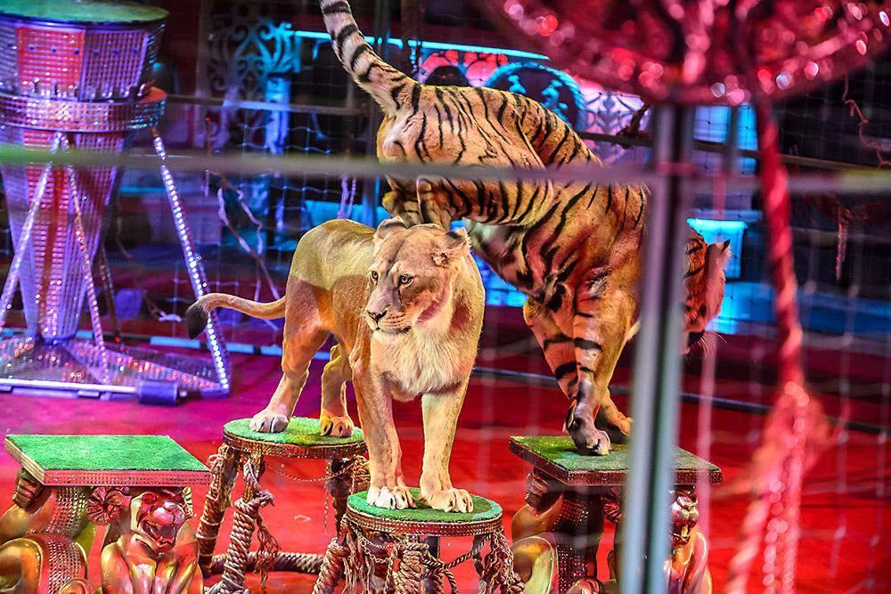 Цирк – это детства удивленные глаза